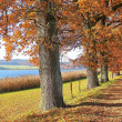 Autumnal hiking trail at lakeside with gnarled oak trees, ba — Stock Photo #41606621
