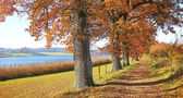 Autumnal hiking trail at the lakeside with gnarled oak trees, ba — Stock Photo