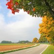 Country road with colorful autumnal trees beside, bavarian lands — Stock Photo