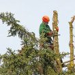 Lumberjack in the tree top — Stock Photo