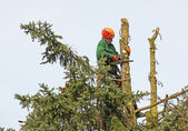 Lumberjack in the tree top — ストック写真