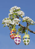 Handcrafted easter eggs on pear tree branch — Stock Photo