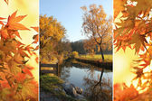 Triple - tranquil brook and autumnal maple leaves — Stock Photo