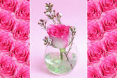 Triple - pink roses — Stock Photo