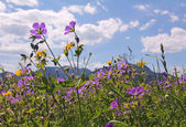 Wildflower meadow in the bavarian alps — Stock Photo