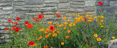 Red poppy, lavender and iceland poppy against grungy stone wall — Stock Photo