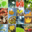 Leaves and needles in the four seasons — Stock Photo #51584471