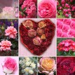 Collage of rose blossoms and rose flower heart — Stock Photo #51585905