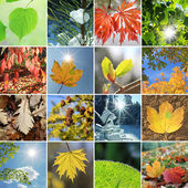 Leaves and needles in the four seasons — Stockfoto