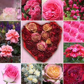Collage of rose blossoms and rose flower heart — Stock Photo