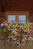 Farmstead window with colorful flower box — Photo