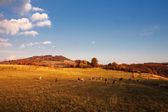 Cows on pasture in autumn — Stockfoto