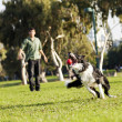 Border Collie Catching Dog Ball Toy at Park — Stock Photo #22384395