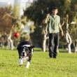 Border Collie Catching Dog Ball Toy at Park — Photo