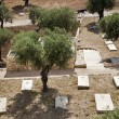Mount of Olives Christian Cemetary — Stock Photo