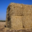 Bale of Hay in a Field — Stock Photo