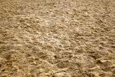 Damp Sand — Stock Photo