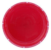 Isolated Red Plastic Cap — Stock Photo