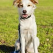 Mixed Breed Dog Portrait in the Park — Foto de Stock