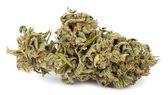 Isolated Cannabis Bud — Stock Photo