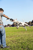 Bull Terrier Mid-Air in Park — Stock Photo