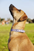 Mixed Breed Dog Portrait in the Park — Stock Photo