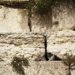 Wailing Wall Close Up — Stock Photo