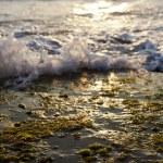 Постер, плакат: Waves Crushing on Seaweed Rock