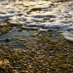 Algae Rock & Surf — Stock Photo