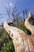 Fallen Tree — Photo