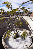 Winter Plant with Skyline at West Village Manhattan New-York — Stock Photo