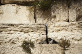 Wailing Wall Close Up — Stock Photo