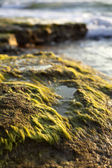 Beach Algae at Sunset — Stock Photo