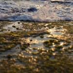 Wave Smashing on Seaweed Rock — Stock Photo