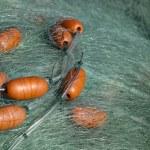 Fishnet with Buoys — Stock Photo