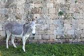 Donkey & Wall — Stock fotografie