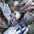 Blue Crabs for Sale - Stock Photo