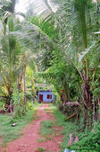 Jungle Path and Blue House — Stock Photo
