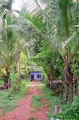 Orman yolu ve blue house — Stok fotoğraf
