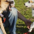 Two Dogs and Trainer Playing in Park — Stock Photo #22471103