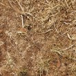 Stock Photo: Soil & Dry Weeds Abstract