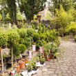 Plant Nursery at Mauerpark Flea Market Berlin Germany — Stock Photo