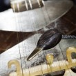 Tar Plectrum & Bridge — Stock Photo