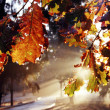 Autumn Leaf at Dawn — Stock Photo