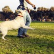 Labrador and Trainer with Dog Chew Toy at Park — Stock Photo