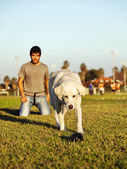 Labrador Running After Chew Toy in Park — Stock Photo