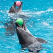Two dolphins playing — Stock Photo #22058637