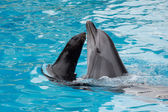 Dolphin a furseal — Stock fotografie