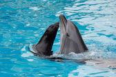 Furseal y delfines — Foto de Stock