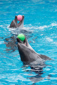 Two dolphins playing — Stock Photo